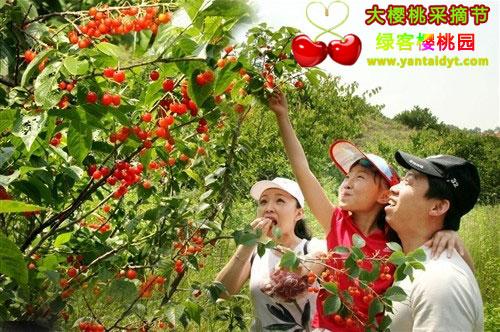 带着您的家人一起体验大自然的魅力:烟台大樱桃菜摘