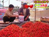 烟台西黄山大樱桃收购市场