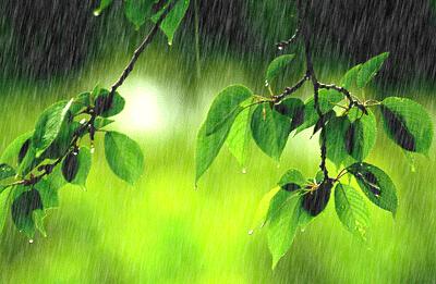 两场春雨滋润烟台苹果大樱桃 减轻春寒影响