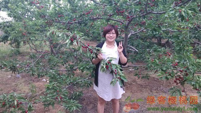 绿客樱桃采摘园