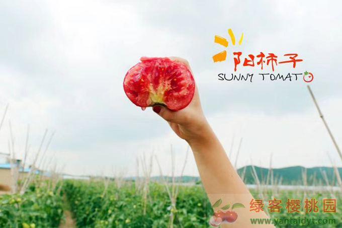 西红柿之乡山西壶关