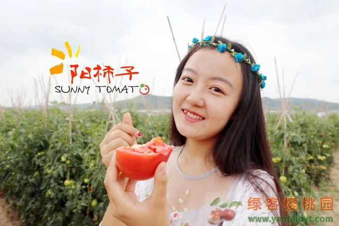 绿客果园,阳柿子