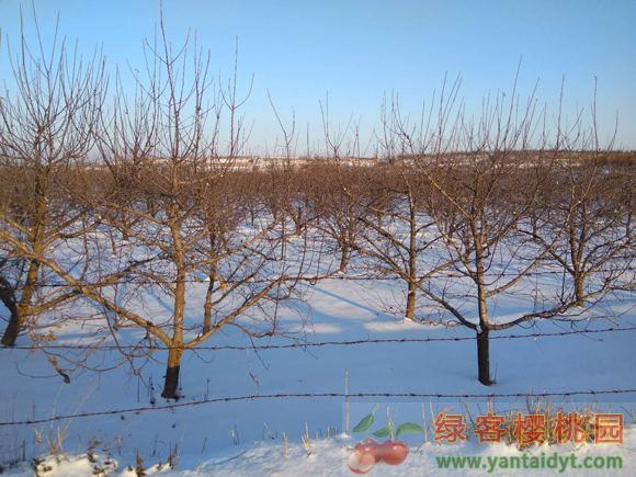 晴天和雪地