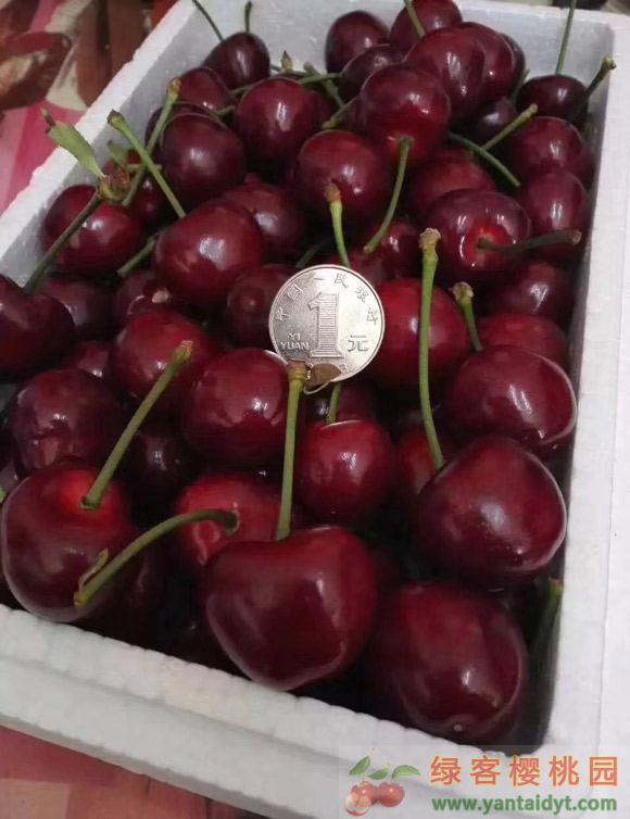 新鲜的大樱桃