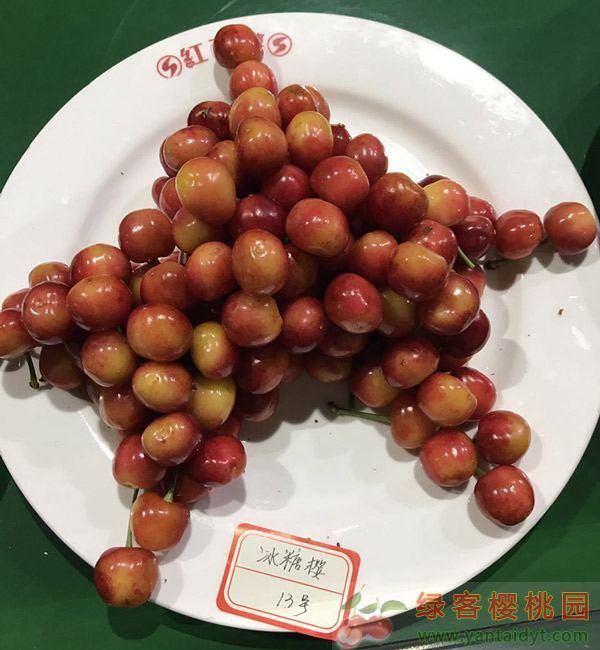 早熟品种冰糖樱樱桃苗